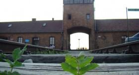 Auschwitz and Salt Mine